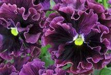 the flower petal-ler / by Chris Holst