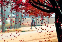 Nature does it better / by Florent Diverchy