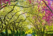 Nice Places  / by Florent Diverchy