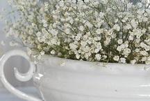 Flowers/Gardening / by Teresa Moore