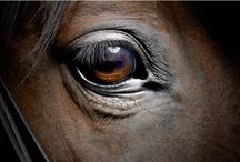 Horses / by Kendi Dray