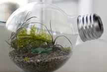 "DIY: Light Bulbs / by Anne ""ArizoNative"""