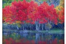 Autumn / by Kendi Dray