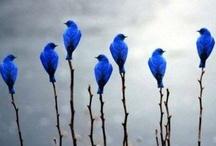 Birdies / by Kathy Barnes