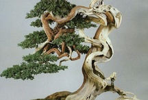 artisTREEscapes:  Bonsai / by Kathy @artistreEscapes Island Garden Venue
