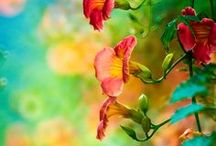 Botanica / by Jeanette Reynolds Cullum