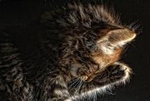 Purrrrrfect Kitties =^..^= / by Karen Sanchez