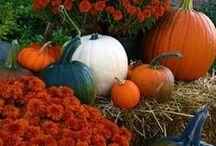 Autumn / by Stephanie Packtor