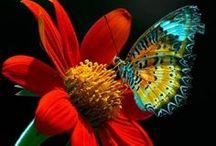 FLOWERS !!! / by Mélissa Levesque
