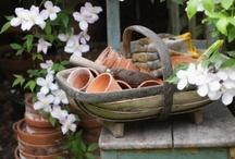 gardens / by Patricia Howell-Jones