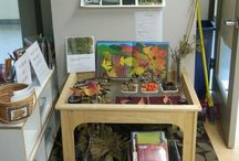Classroom Provocations and Setups/Reggio inspiration/appealing / Appealing displays of materials for interaction and stimulation in the classroom. Incorporating nature and mirrors.  / by Jen Cavalieri