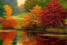Autumn / by Evelina Tetsman
