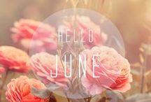 June Color Crush / Tangerine Dreams / by Donna Morgan