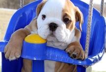 I love bulldogs / by Lynn Knochel