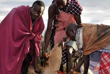 Tanzania Highlights / by Africa Dream Safaris