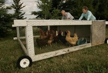 Chickens, pets & other critters / by Women In Ag