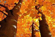 Autumn / by Hope Vaillancourt