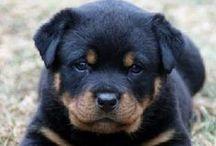 I Want A Puppy  / by Iya Ruiz