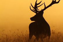 antler obsessed... / by Cori