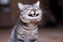 Cat pics that make me smile / by Angela Walker
