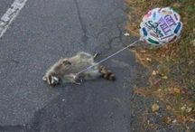 Sillyness  / I find these pins hilarious.  If you don't, maybe you should work on your sense of humor ;)  / by Lindsáy Russell