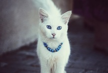 cats / by Victoire Some