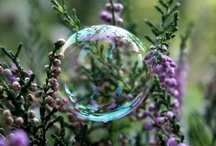 Don't burst my bubble! / Bubbles, dew droplets, rain and gazing balls all hold a surprise all their own for us to find. / by Rachel Smith