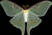 Moths  / by Heidi Young