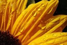 Flowers / by Marleen Boersma