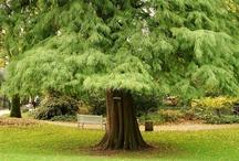 Trees / by Marleen Boersma