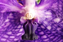 Fairy nature / I found in nature fairy items, and looks. / by Marleen Boersma