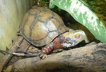 Terrific Turtles & Tortoises / One of my all-time favorite creatures... / by Write | Market | Design