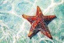 Take Me to the Beach / by Aijeleth Shahar Boda