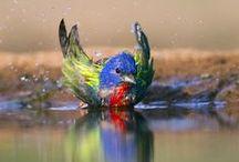 Birds / by Photo.net