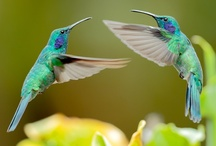 Hummingbirds / by Peggy Gibbs