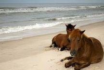 Horses / by Photo.net