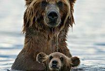 Bears / by Photo.net