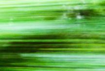 Green / by Photo.net