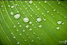 Water Drops / by Photo.net