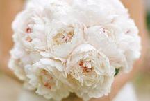 wedding / by Karley Irwin