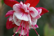 Flowers / Para alegrar el alma  / by Sobeyda Rodriguez