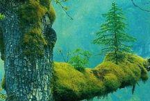 I heart nature & science / by Jenna Mell