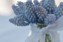 Blue & White / by Nancy Butterfield |The Freckled Gardener