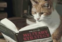 """Catz :3 / """"...y los gatos, siempre inevitablemente los minouche morrongos miaumiau kitten kat chat cat gatto grises y blancos y negros y de albañal, dueños del tiempo y de las baldosas tibias"""" Rayuela, Julio Cortazar---------------------Miau. / by Liu Prato"""