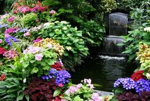 Gardens & Flowers / by Narisara J Griffaw