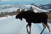 Wild West - Wyoming / by Jonelle Cochran