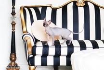 Accessories & Furniture for the Home / by Reta Threadgill