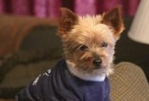 Yorkies / I have 2 yorkies (Zena and Annie) and love spoiling them. They love wearing rhinestone doggy tees.  Check out www.Doggalicious.com & www.ChristianCrystals.com / by ChristianCrystals.com