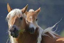 {My Equestrian Life}  / by Sierra Bailey