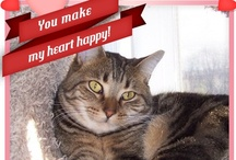 Hartz Valentine's E-Cards / This Valentine's Day show your friends you care by sending them a Hartz® Valentine! Send a picture of your purr-fect friend to tell someone they're the cat's meow or a picture of your barking pup to say I woof you. / by Hartz